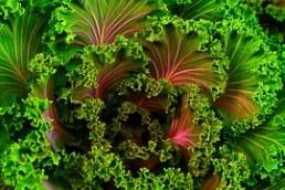 kale plant-690051__180