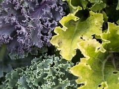 leaves=vegetables-940177__180